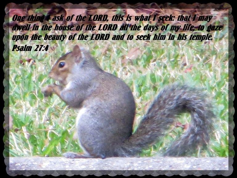 © Photo Artist Susan Ruth Robertson 090025006100 041.JPG