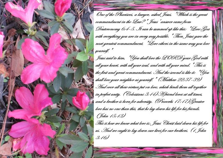 © Photo Artist Susan Ruth Robertson 090025006100 SX540HS 005 - Copy.JPG
