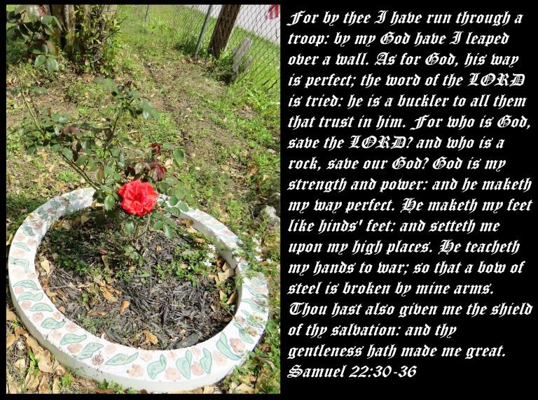 © Photo Artist Susan Ruth Robertson 090025006100 SX540HS 027 - Copy.JPG