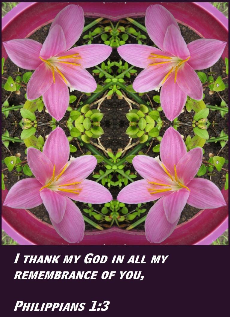 © Photo Artist Susan Ruth Robertson 090025006100 SX 400 (16) - Copy.JPG