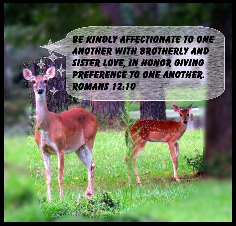 © Photo Artist Susan Ruth Robertson 090025006100 SX 540HS  (83) - Copy - Copy.JPG