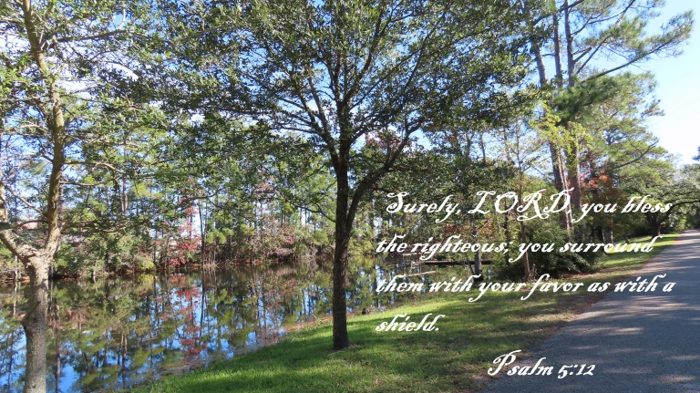© Photo Artist Susan Ruth Robertson 090025006100 SX70HS 057 - Copy.JPG