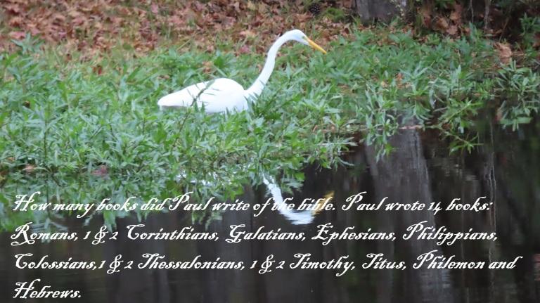 © Photo Artist Susan Ruth Robertson 090025006100 SX70HS 061 - Copy.JPG